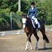 Horses, riding, jumping