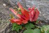 Wallflower  .  .  . by ericrstoner