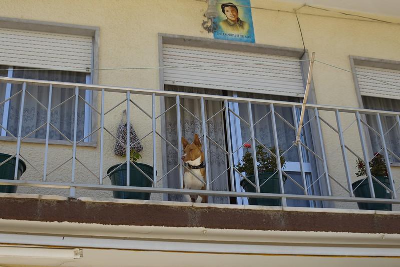 Собакен под своеобразной мемориальной доской