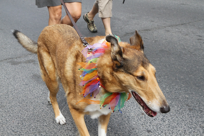 PP Puppy pride