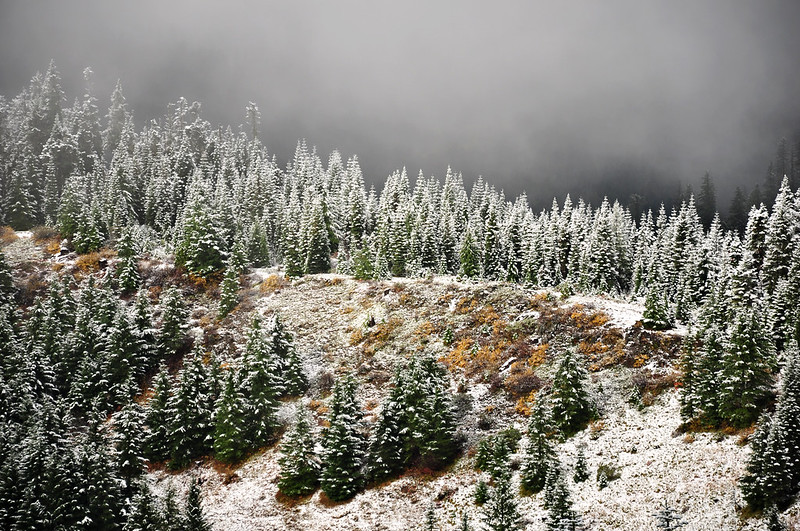 Snow-dusted trees