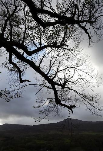 A grey November day