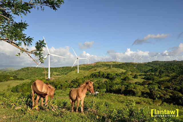 Horses at Pililia Wind Farm