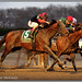 Tonalist Wins Cigar Mile
