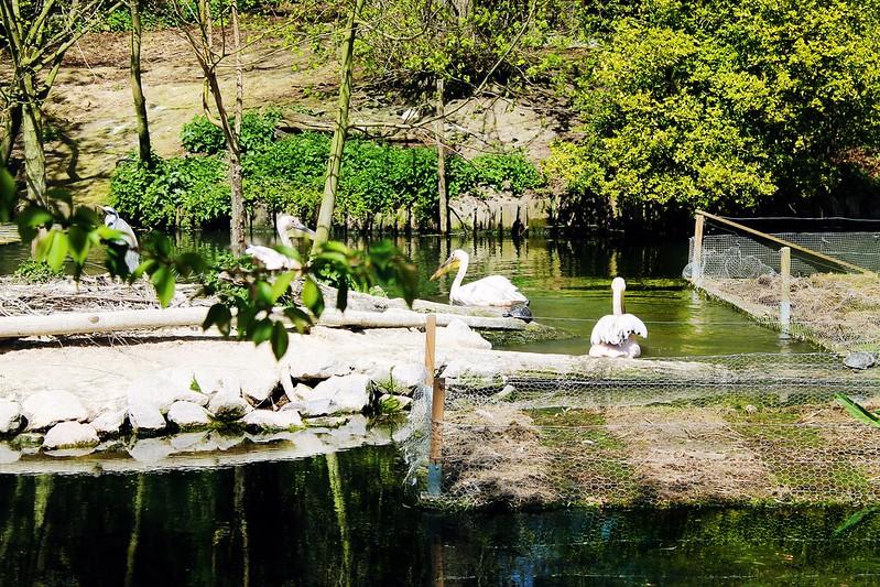 Drawing Dreaming - Guia de Visita de Lille - Zoo de Lille