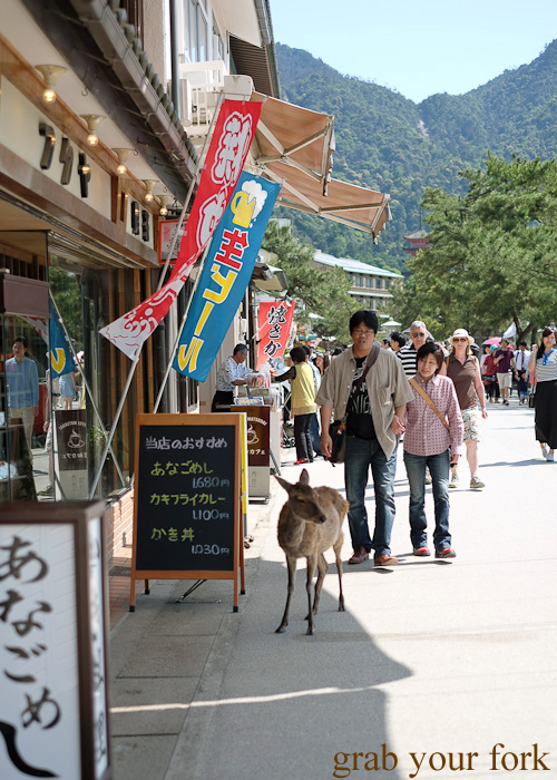Wild deer roaming the streets of Miyajima Island