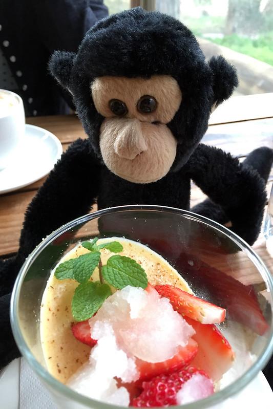 Monkey likes pannacotta