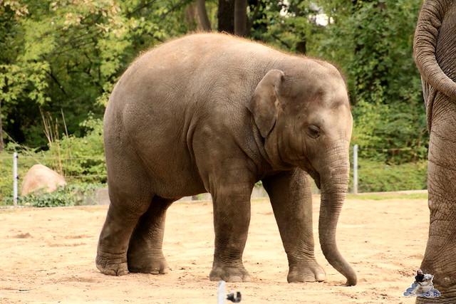 Zoo Berlin 18.09.2015   01