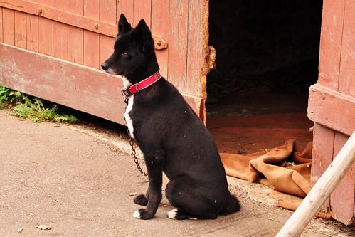 Fünfmühlenwanderweg Hund Immer horche immer gugge