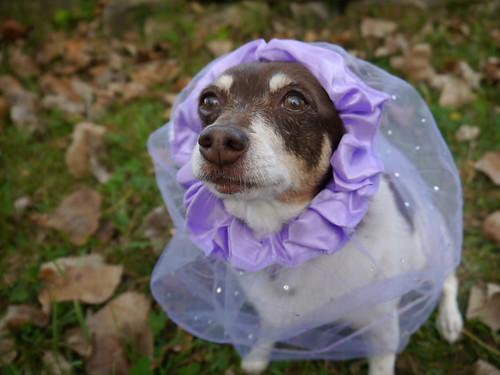2015-09-21 - Rennie Princess - 0007 [flickr]
