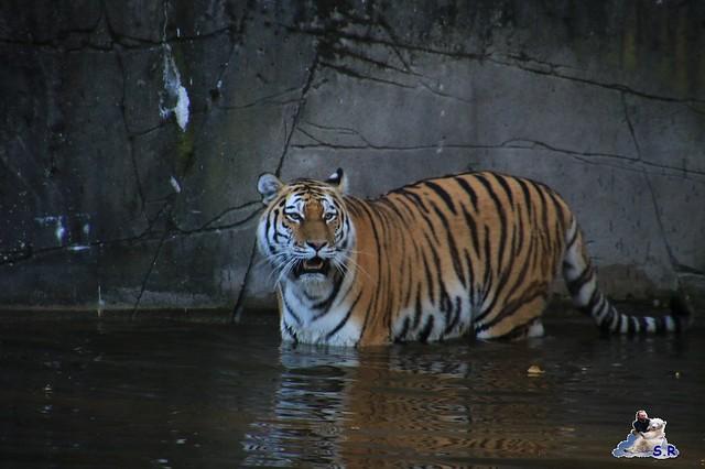Tierpark Hagenbeck 27.09.2015 0148