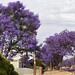Delicious Purpleness by Georgie Sharp