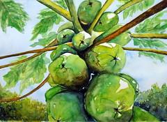 Papaya tree, by Sandra S. - DSC01369
