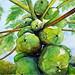Papaya tree, by Sandra S. - DSC01369 by Dona Minúcia