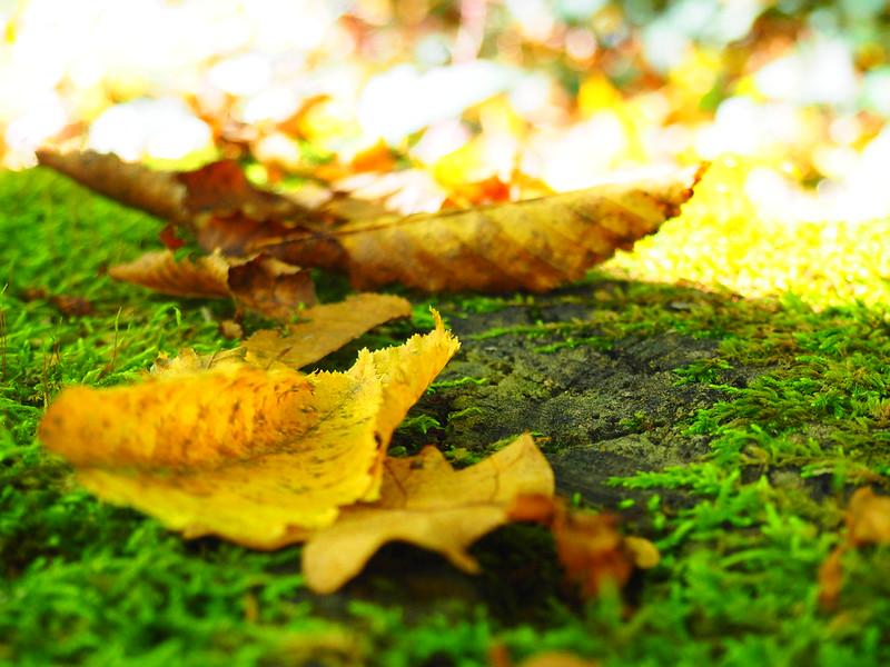 L'automne en Val de Garonne