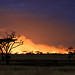 Serengeti national park on fire! by Maria_Globetrotter