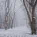 Winter Dusting by Damian_Ward