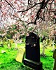 { #spring + #death }
