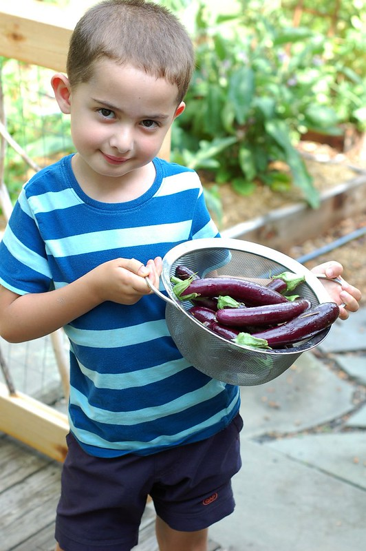 Will with our Japanese eggplants by Eve Fox, the Garden of Eating, copyright 2015