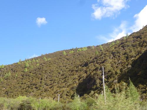 CH-Route-Danba-Bamei (11)
