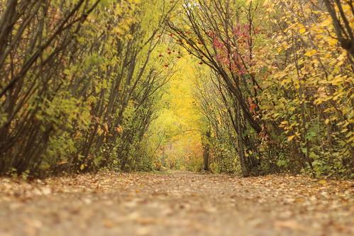 The Autumn Trail II (SOTC 179/365)