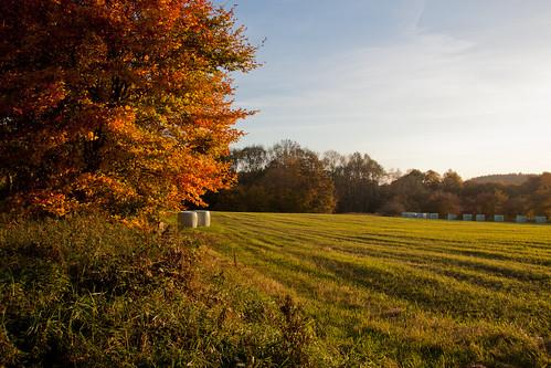 Herbst in und um Travenbrück
