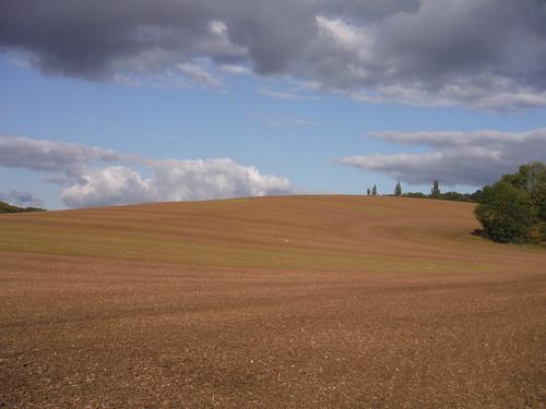 Rolling Field near Hall Wood