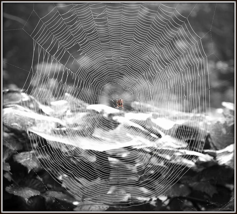 Spiderweb (04-10-2015).