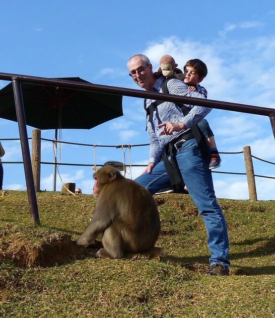 Monkey sees a monkey