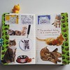 #cats #cutecat #gato #artjournal #moleskine #miau #diary #stamps #quote #kitten #love
