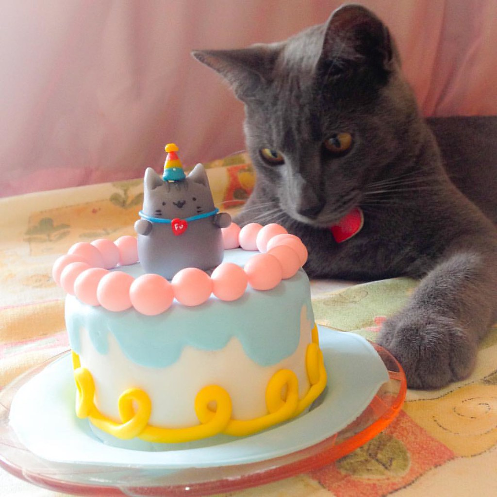 I Made A Cake To My Cats Bday Last Day 12 11