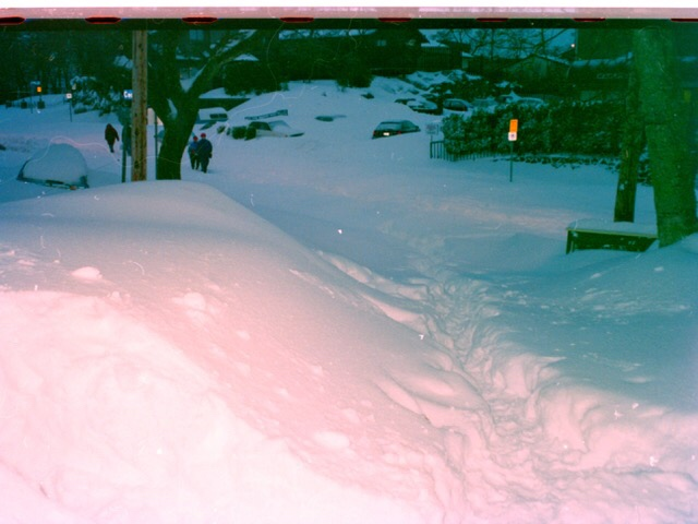 My car is under here somewhere - Cedar Hill at Hillside. Photo by Gilian Hillidge.