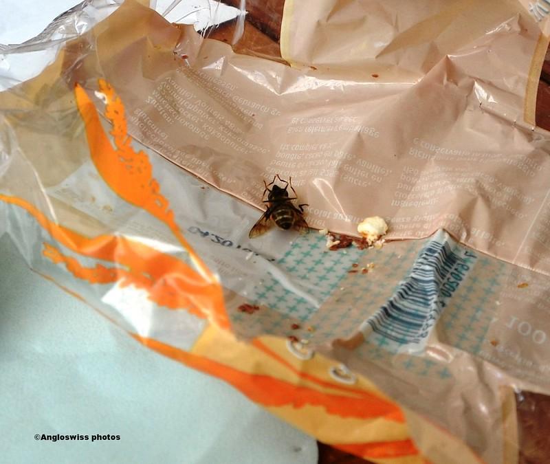 Kamikaze Bee