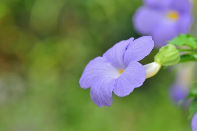 立鶴花 (3)