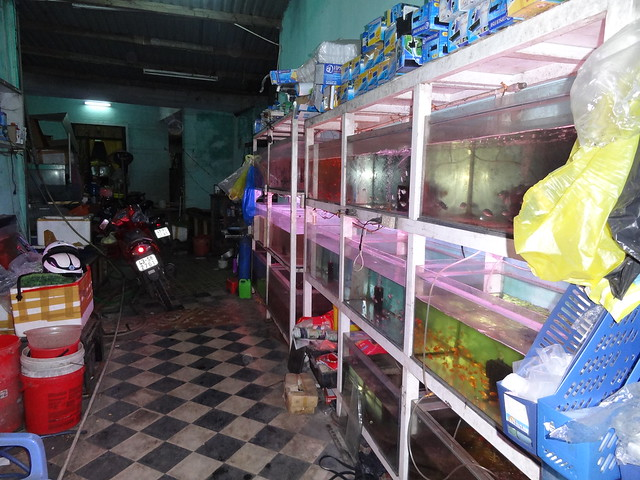 aquarium stores in Danang, Vietnam 20646063638_e60885214d_z