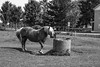 THIRSTY HORSE by aldogiraldo