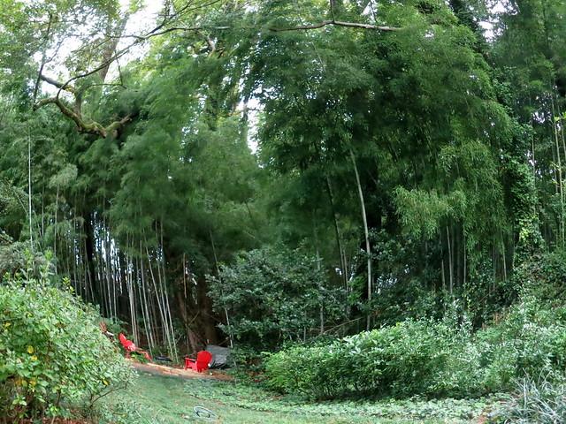 Backyard Forest backyard forest, knives and fire | bushcraft usa forums
