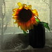 Sunflower light by Sappho et amicae