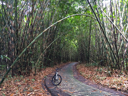 Bamboo forest bike ride