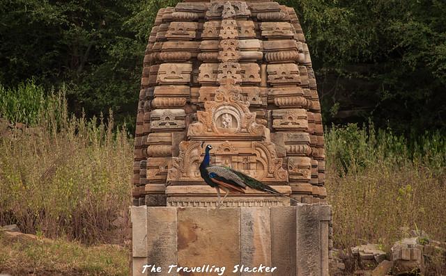 Bateshwar Temple (22)
