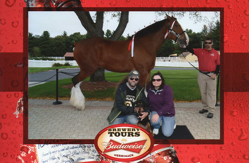 MattNicPenny_Clydesdale_10315