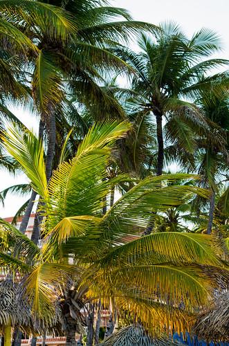 sky sunrise places aruba holidayinn caribbean palmbeach smcpda55300mmf458ed pentaxk5