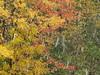 Neige et grêle un 17 octobre