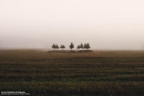 autumn trees sky white green fall nature field grass yellow fog circle haze sweden perspective center symmetry half sverige saverio autellitano