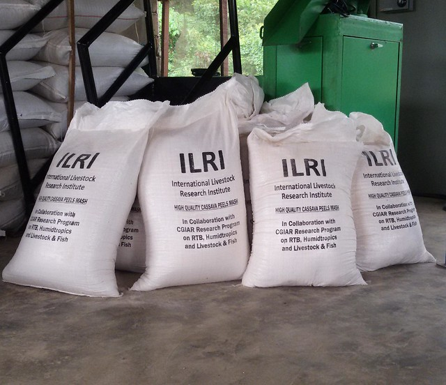 Bags of high quality cassava peel mash feed, Ibadan, Nigeria
