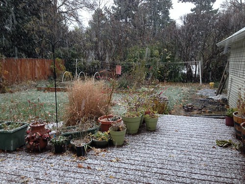 First snow in the yard this winter!