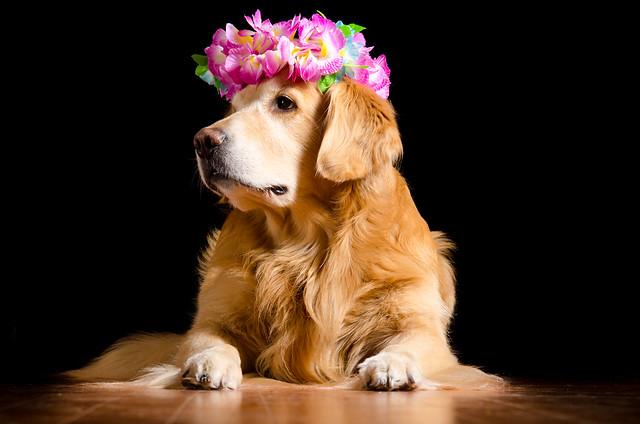 Flower Dog