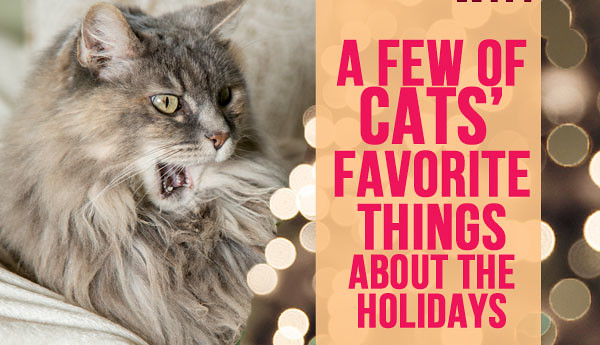 cats-favorite-things-about-holidays