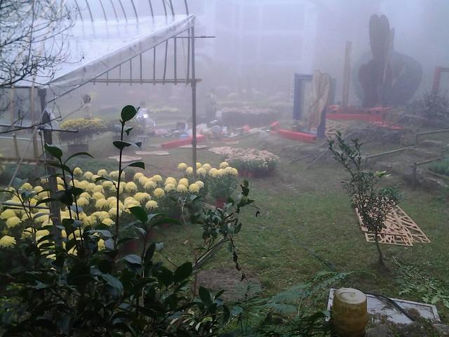 24462霧裡看花