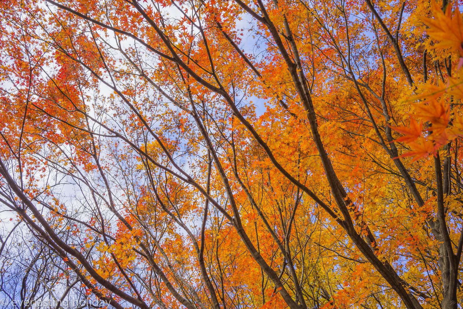 小金井公園 Koganei Park-0012